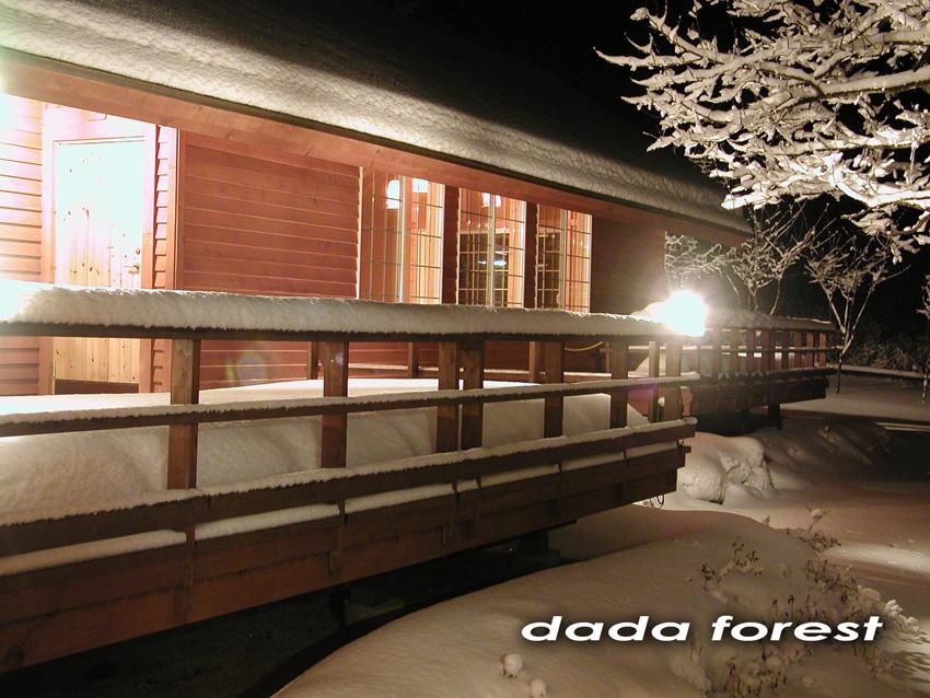 2003dadaforest (7).jpg