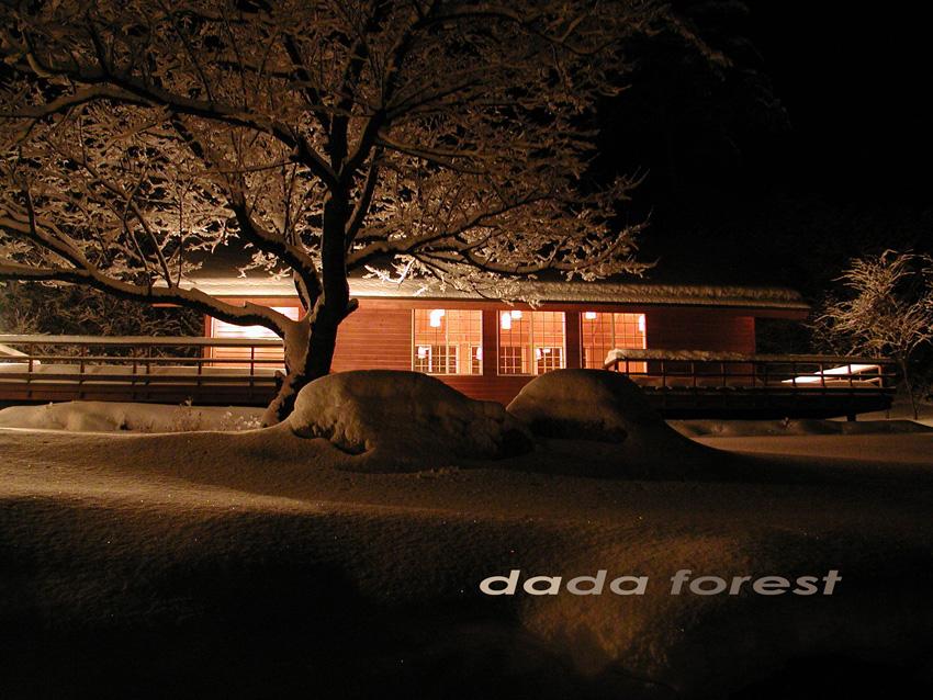 2003dadaforest (9).jpg