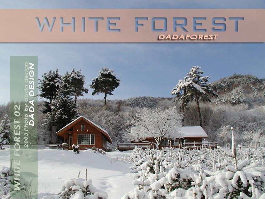 2003dadaforest (11s).jpg
