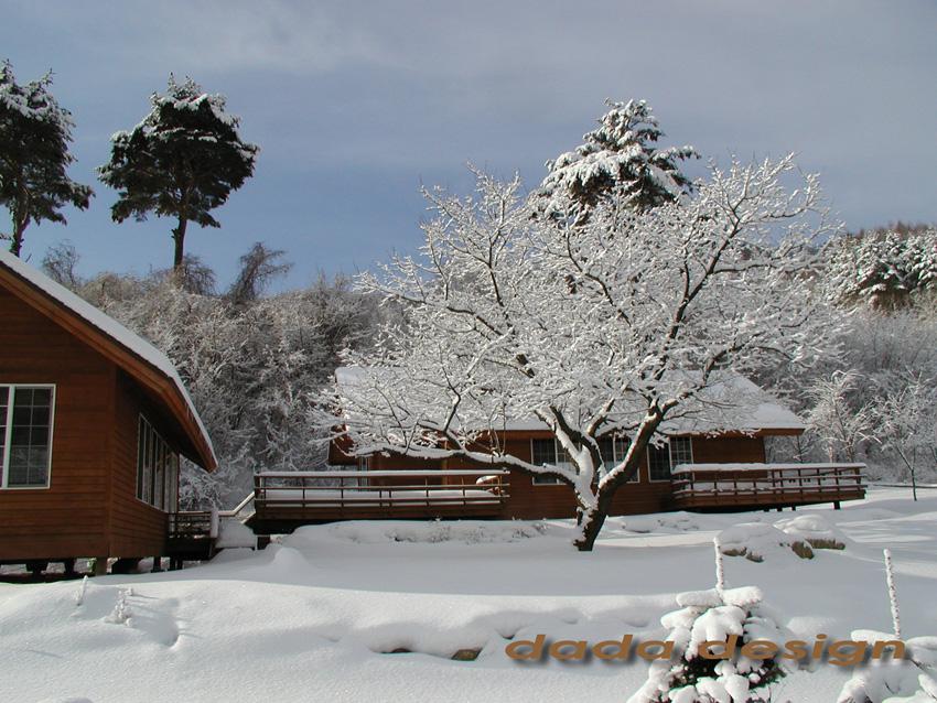 2003dadaforest (12).jpg
