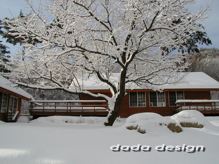 2003dadaforest (13).jpg