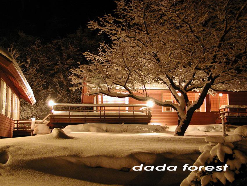 2003dadaforest (19).jpg